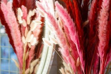 closeup of pink bird feathers