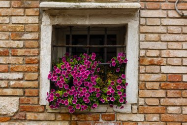 Flowers behind Wrought Iron Grill or bars on Window