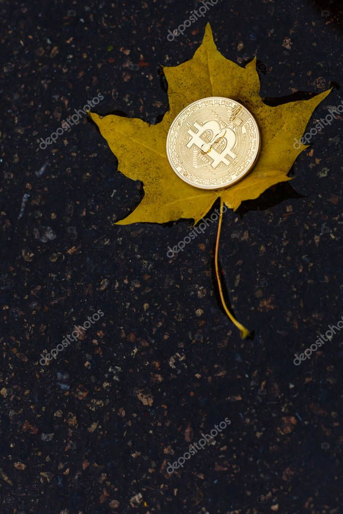 bitcoin on yellow leaf in water after rain