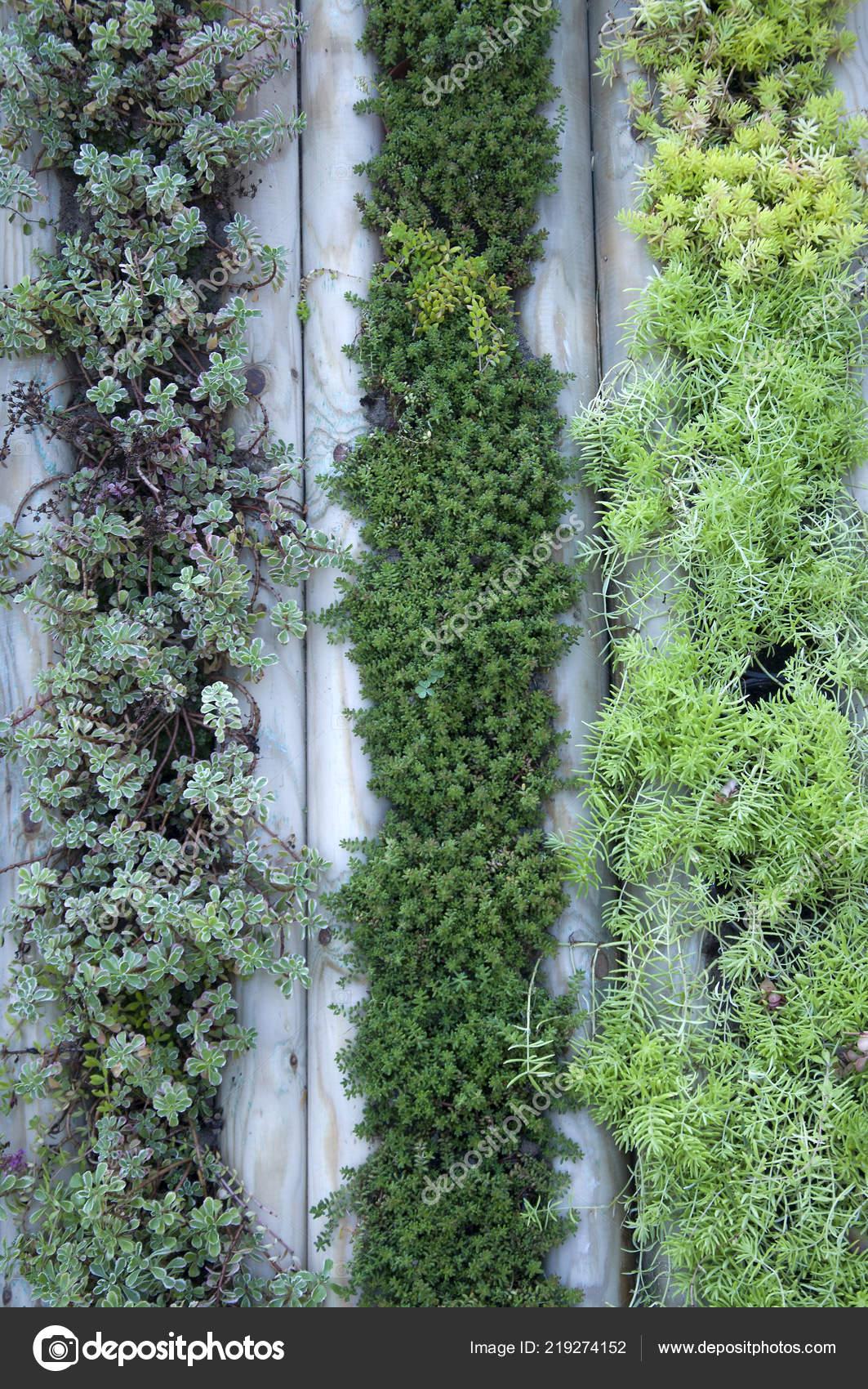 Wand Der Pflanzen Garten Schöne Dekor Stockfoto Romikmk 219274152