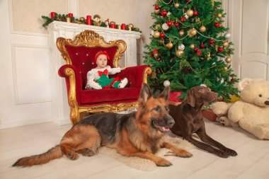 a little infant girl is sitting in a big golden chair next to the Christmas tree and the white fireplace. There are two guard dogs on the floor near her, shepherd dog and a Doberman
