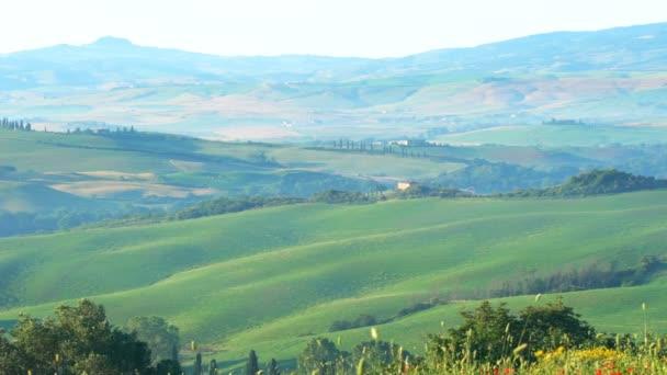Toscana, Olaszország - 2018. június 10.: A gyönyörű toszkán táj nyáron piros pipacs virágok imbolygott a szél, a zöld mező, a fák ciprusok és a sok gazdaságok, Valdocia, Közép-Olaszország