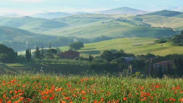 Gyönyörű táj, a dombos Toszkána Olaszország piros pipacs mező, parasztház, ciprusok fa és zöld mezőgazdasági területen