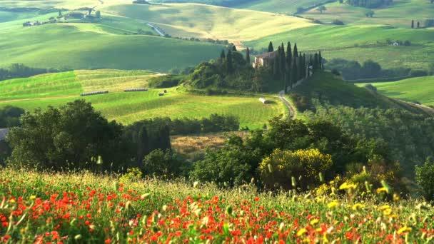 Krásná krajina kopcovité toskánské oblasti s červenými květy máku kymácí ve větru, zemědělská usedlost, strom cypřišů a zemědělské oblasti, Toskánsko, Itálie
