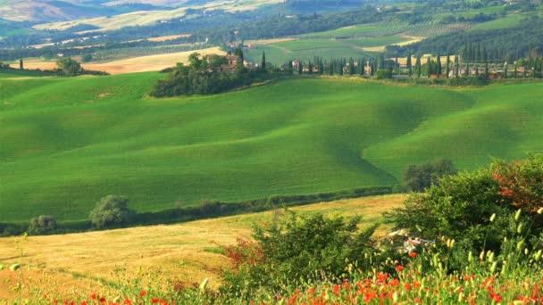 Gyönyörű kilátás nyílik a zöld dombos toszkán mező a nyári és a tipikus olasz ház, a piros pipacs mező, a ciprusok fa és a mezőgazdaság területén, Toszkána, Olaszország