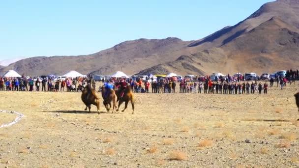 Velbloudí dostihy na festivalu Golden Eagle v Ulgii, Mongolsko