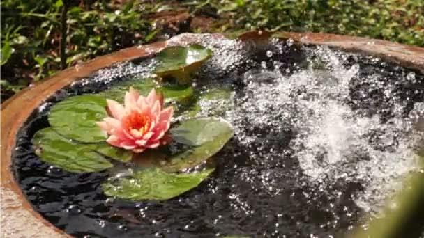 Čerstvou vodu do pánve lotus v pomalém pohybu