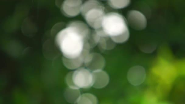 Přírodní bokeh během dešťových srážek na listoví stromu. Abstraktní rozmazané pozadí slunečního světla, které proniká listím stromu.