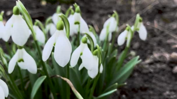 zár megjelöl kilátás a virágzó hóvirág virágok