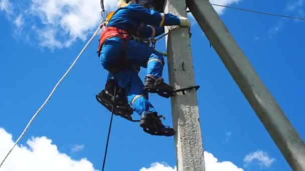 electrician-fitter climbs pole with leg-irons holding mannequin rescueing