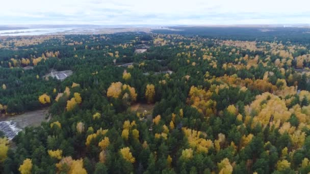 aerial panorama evergreen and gold deciduous forest