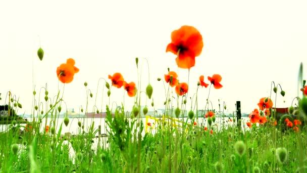 Wild flower in the meadow