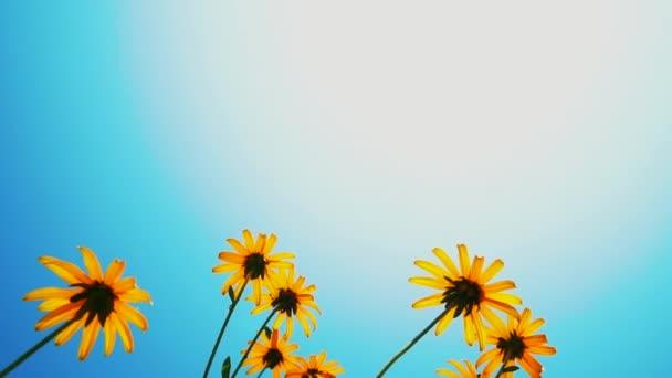 Nyári jelenet. A százszorszép virágok fog virágozni a kertben alatt egy kék ég
