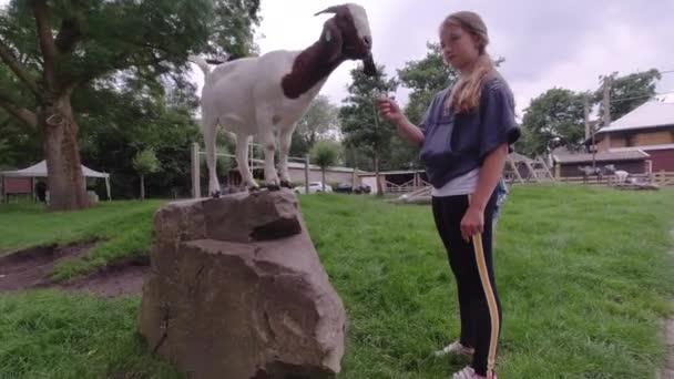 Glückliche Kinder kümmern sich auf dem Tierhof um eine kleine Ziege