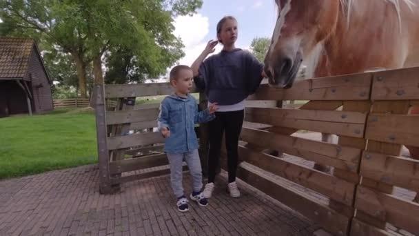 Nettes Mädchen streichelt einen Pferdekopf. Zärtlichkeit und Fürsorge für Tiere