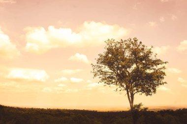 A big tree sadness alone on summer