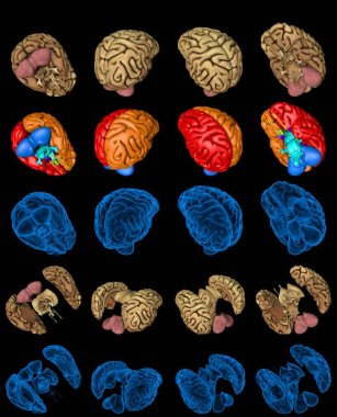 Set of isolated brain renders - whole and split with roentgen style image and highlighted functional zones, medicine concept - cg 100 MPx medical 3D illustration