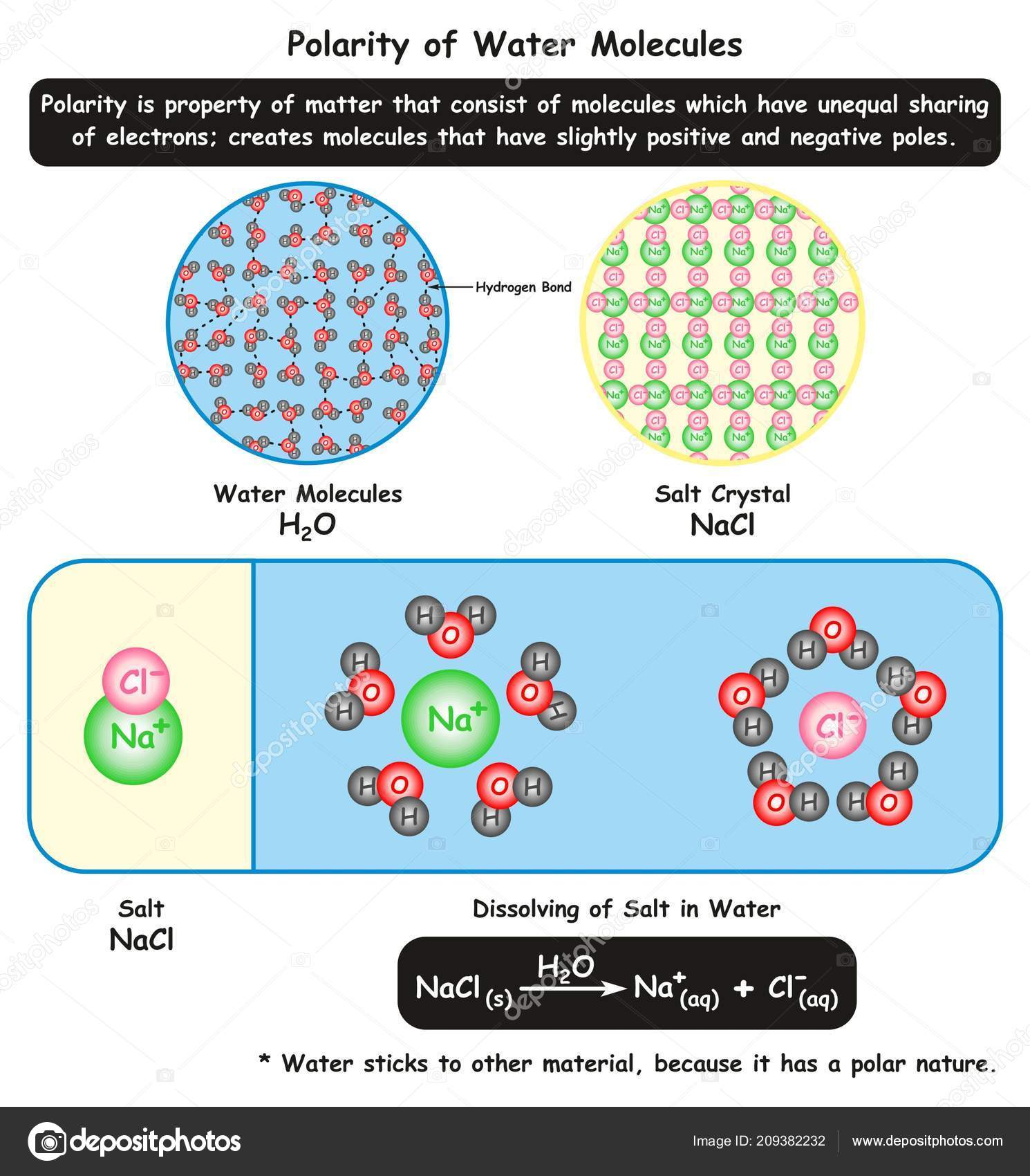 Polarity Water Molecules Infographic Diagram Showing Its
