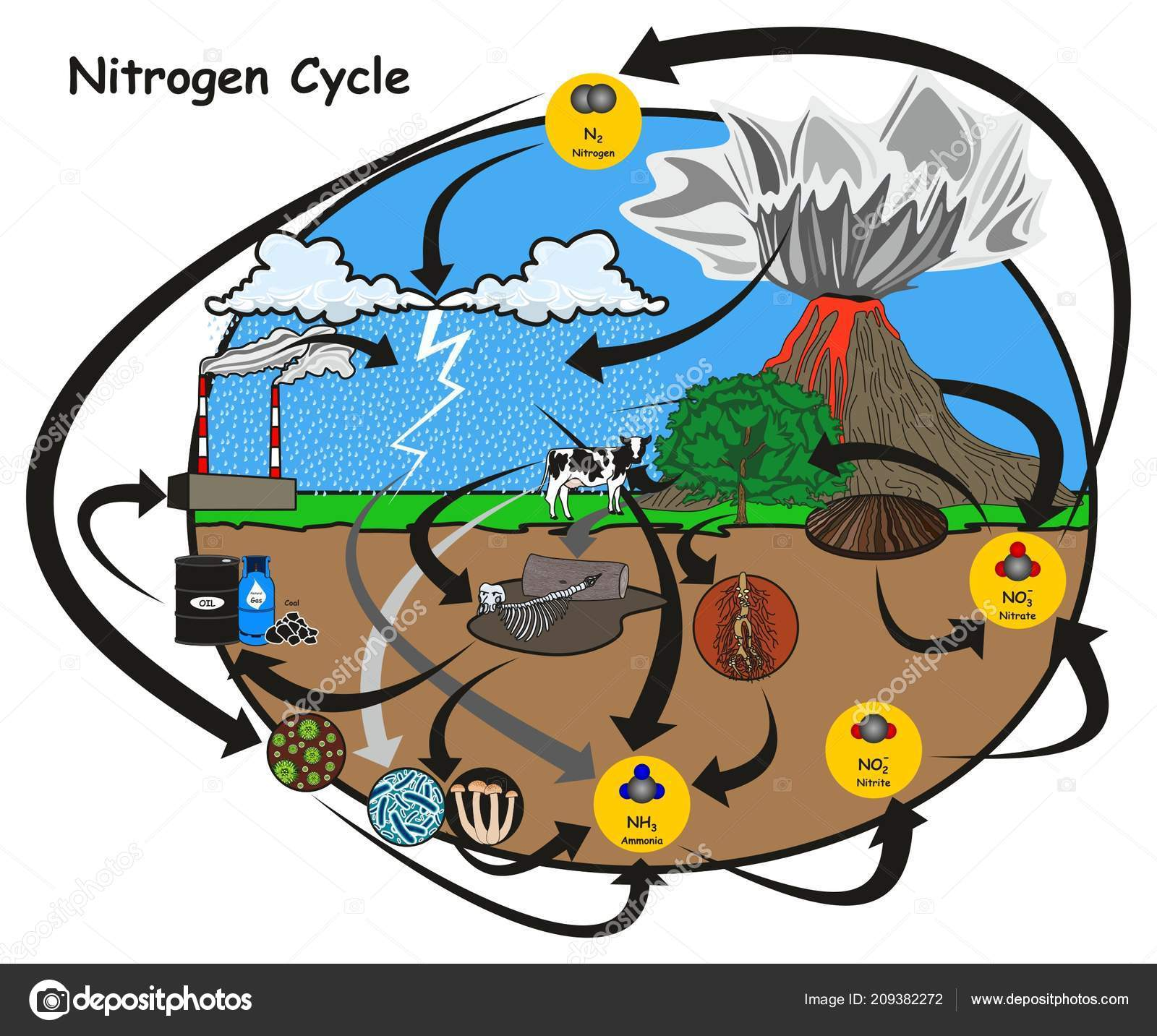 Nitrogen cycle infographic diagram showing how nitrogen circulation nitrogen cycle infographic diagram showing how nitrogen circulation human environment vetores de stock ccuart Gallery