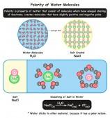 Fotografie Polarität der Wassermoleküle Infografisches Diagramm, das seine mikroskopische Ansicht zusammen mit der Kristallstruktur des Salzes zeigt und wie es sich im Wasser für den Chemieunterricht auflöst