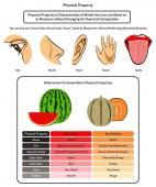 Fotografie Infografisches Diagramm mit physikalischen Eigenschaften, das die Verwendung menschlicher fünf Sinne zeigt, ohne die chemische Zusammensetzung und den Vergleich von Wassermelone und süßer Melone für den naturwissenschaftlichen Unterricht in Physik und Chemie zu ändern