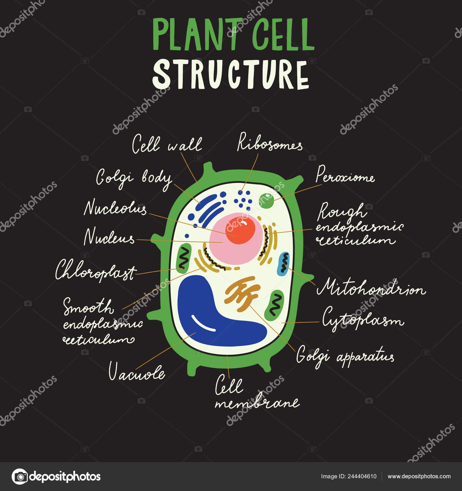 Estructura De La Célula De La Planta Cartel De Mano