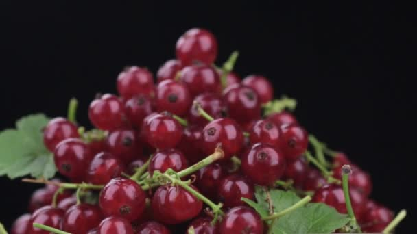 Close-up of rotation of a heap of ripe redcurrant.