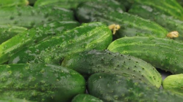 Közelről. Forgás természetes érett zöld uborka-ben csepp harmat. Élelmiszer-háttér