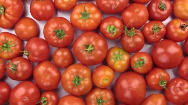 Rotace v hromadu červených rajčat.