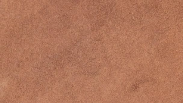 Rotation of natural suede leather. Brown chamois texture. Fluffy and soft shammy-leather.