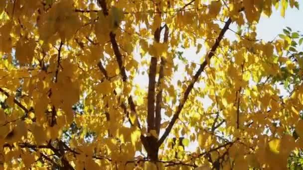 Barevné žluté podzimní listí na letní oblohu s paprsky sluneční erupce.
