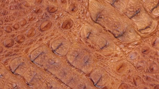 Rotation, close-up of the structure of natural crocodile skin.