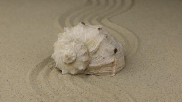 Zoom, mušle, ležící na zigzag z písku