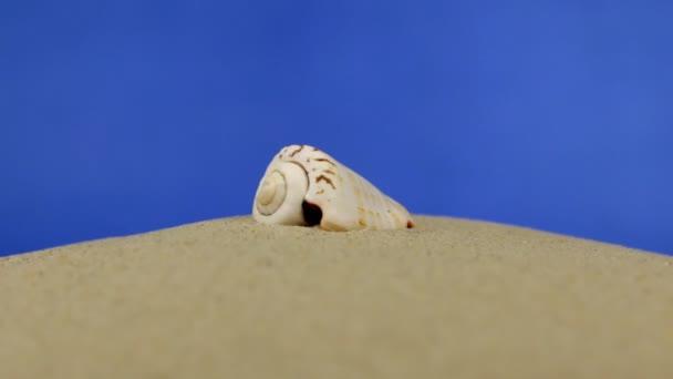 Zoom. schöne Muscheln, die im Sand liegen. isoliert