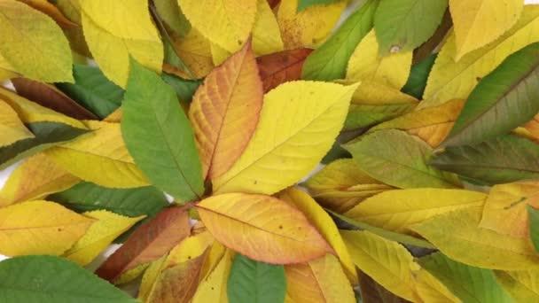Střídající. Barevné a světlé pozadí z padlých podzimních listů. Podzimní pozadí.