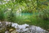 krásná jezera Plitvice v Chorvatsku v koncem letní sezóny, vyčistěte čistou vodou a reflexe stromů v ní, úžasné přírodní rezervace v srdci Evropy