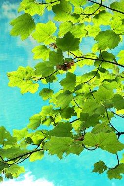 """Картина, постер, плакат, фотообои """"красивые озера плитвицкие в хорватии в конце летнего сезона, с чистой чистой водой и отражением деревьев в нем, удивительный природный заповедник в самом сердце европы фото"""", артикул 212471564"""