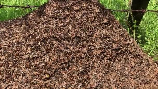 Many ants crawling on the anthill