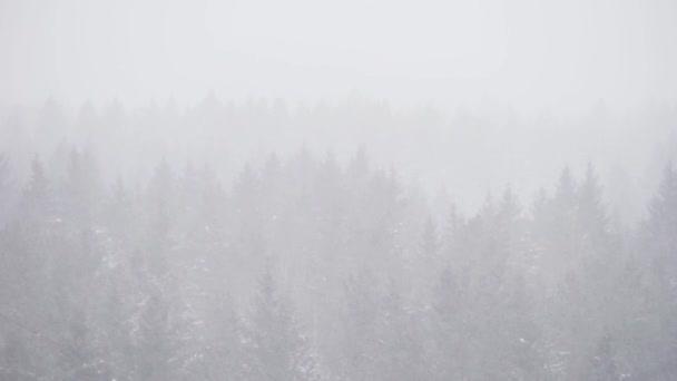 Čelní pohled z výšky na lesy smrků v zimě zatažené den v sněhové bouři
