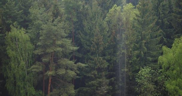 Zavřít zelené vrcholky lesa v deštivém dni