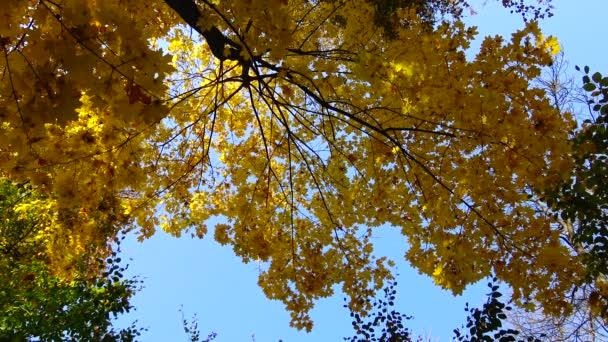 Podzim, žluté listy, listový pád v Sophia parku, Uman, Ukrajina