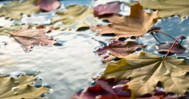 Breeze Stirs the Fallen Leaves. On the surface of the blue water are bright autumn leaves. The breeze on the water surface creates small ripples. Filmed at a speed of 120fps