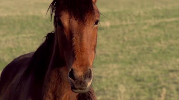 kůň vypadá zvědavě na kameru a táhne vzduch nozdry. Zpomalený pohyb rychlostí 240 snímků za sekundu