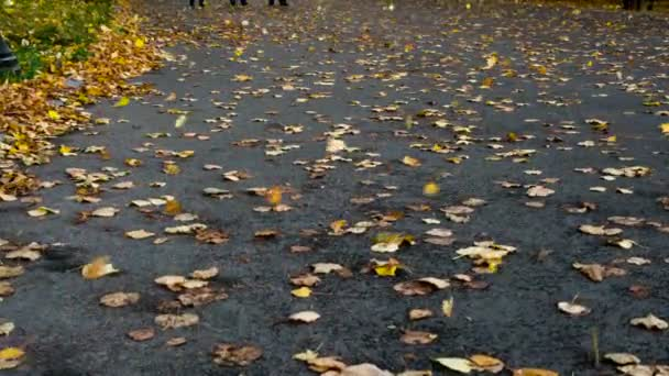 Yellow maple leaves flying on an asphalt track in the park. Filmed at a speed of 120fps