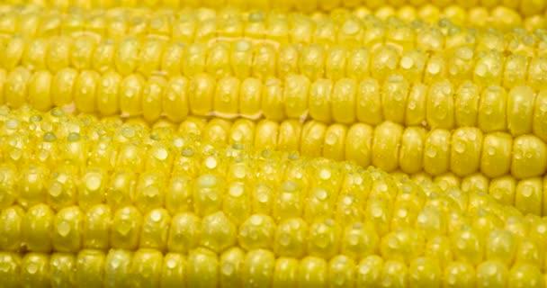 Zralé kukuřičné klasy jsou pokryty kapkami vody. Pomalu se otáčejí před kamerou