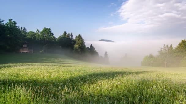 Mlhavé ráno v zelené louce časová prodleva