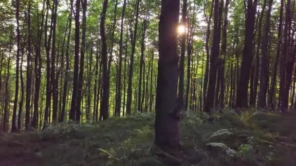 Panoramatický pohled ze zeleného lesa v ranním světle svítání