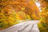 Vidéki út az őszi őszi erdei erdő Aomori Tohoku Japánban