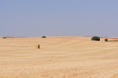 a farm field of the countryside with straw bales, agriculture landscape, background