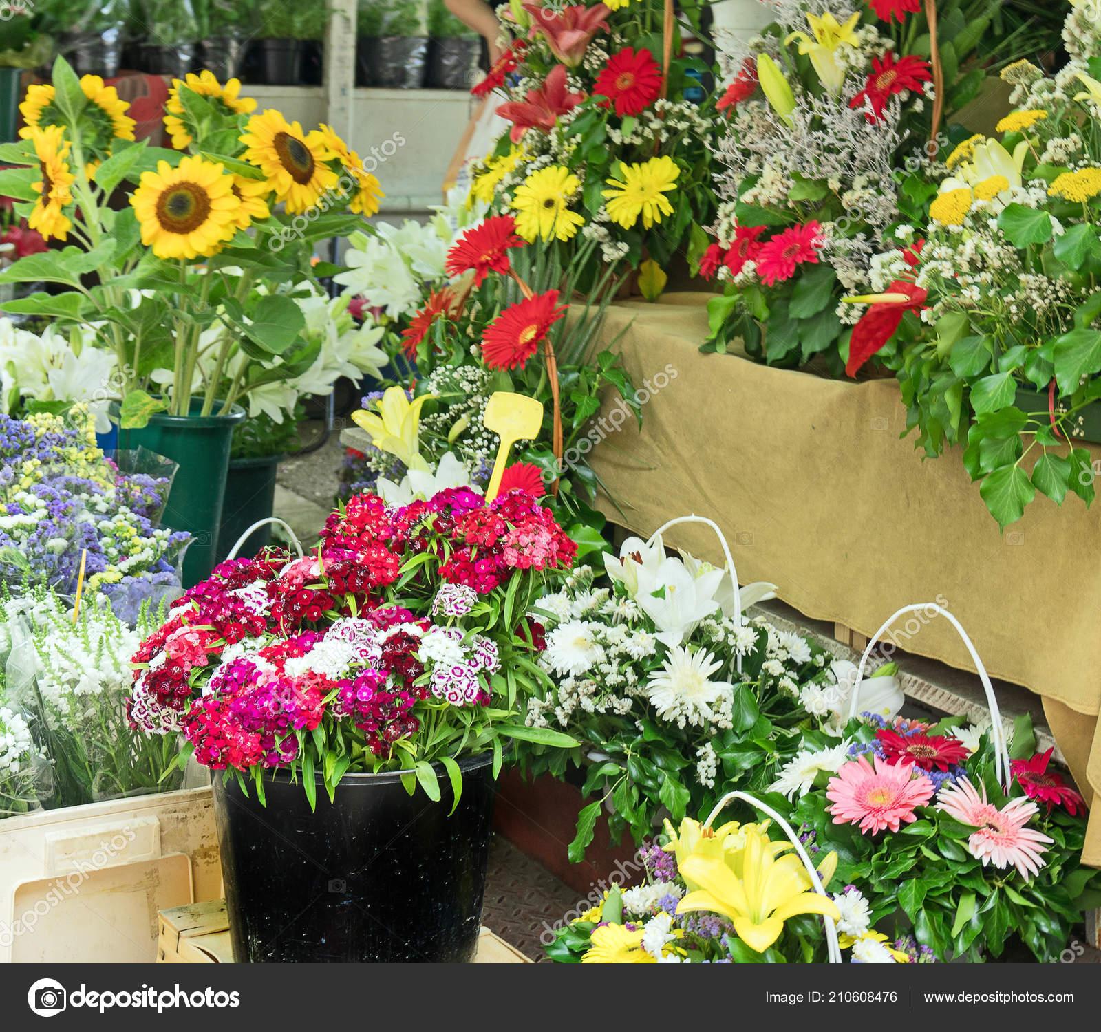 Flower Market Variety Flowers Stock Photo C Dmitrimaruta 210608476